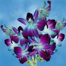 inexpensive flower delivery online dyed blue orchids discount flower delivery global