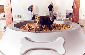 it s that dominic wilcox designs exhibition for dogs