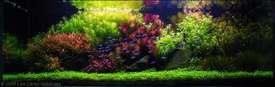Planted Aquarium Aquascaping Aga Aquascaping Contest Delivers Stunning Freshwater Views News