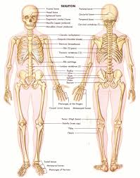 body parts anatomy body parts anatomy quiz body parts anatomy