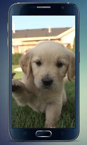 labrador puppy live wallpaper android apps google play