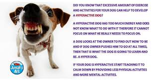 hyperactive dogs hyperactive dogs the real reason why a dog is hyperactive by