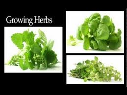 herb garden location and soil preparation youtube