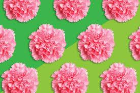 7 valentine u0027s day flowers that beat roses reader u0027s digest