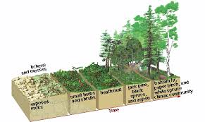 quia primary and secondary succession