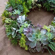 succulent wreath cuttings assorted succulents wedding succulent favors for sale
