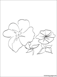 daffodil flower garden coloring daffodil coloring