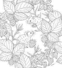 nature scene coloring pages 1300 best coloring pages images on pinterest coloring books