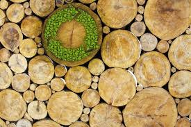 using wood for responsible renewable building bob vila