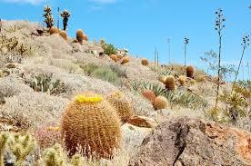 where is anza borrego plum canyon hike anza borrego picture of anza borrego desert