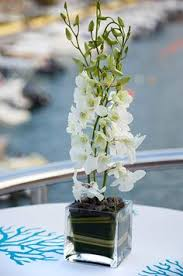 orchid centerpieces potted plant wedding reception flowers orchid wedding