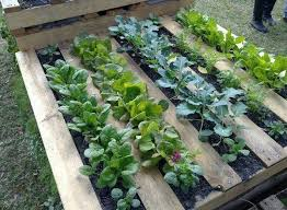 Diy Garden Bed Ideas 25 Diy Ideas Using Pallets For Raised Garden Beds Snappy Pixels