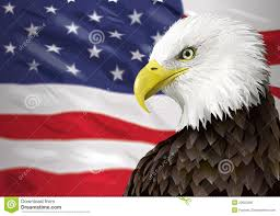 Bald Eagle On Flag Picture Of Bald Eagle And Flag Hd Wallapaper