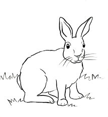 cottontail rabbit coloring page samantha bell