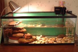 box turtle habitat aquarium