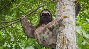 Tropical Dry Forest Animals And Plants - 15 facts about rainforests for kids national geographic kids