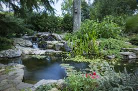 Patio Pond by Aquatic Plants Add Beauty And Filtration To Your Pond U0026 Stream