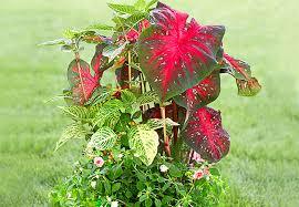 Patio Plants For Sun 12 Container Garden Combos