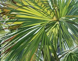 palm for palm sunday prayer for palm sunday doug s