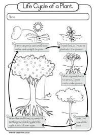 collections of plant life cycle printable worksheets unique