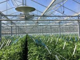 ventilation fans for greenhouses multifan v flofan efficient ventilation for tomato greenhouses and