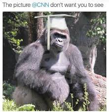 Gorilla Memes - must see harambe the gorilla memes wantyoutosee bossip