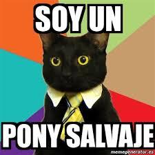 Meme Pony - meme business cat soy un pony salvaje 722994
