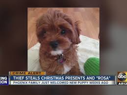 gifts puppy stolen from house abc15 arizona