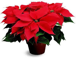 decorative indoor plants decorative indoor plants easy care potted plants interior design