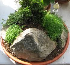 garden mini zen garden designs