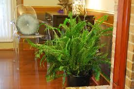 Low Light House Plant Low Light Houseplants