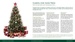 christmas tree residential marketing brochure