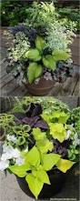 Potted Plants For Patio Best 25 Container Plants Ideas On Pinterest Planters Shade
