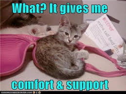 Sleeping Cat Meme - a cat sleeping in a bra dump a day