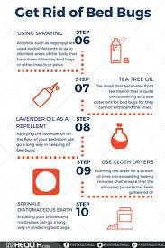 best 25 bed bug remedies ideas on pinterest bed bug spray bed