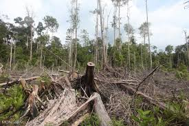 forests november 2017 browse articles forests can beat humans at restoration study finds
