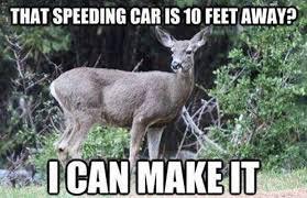 Funny Deer Memes - deer meme