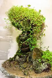 133 best terrariums images on pinterest plants mini gardens and