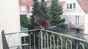 balkon katzensicher machen balkon ohne netz katze carprola for