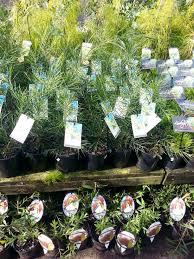 native plants nursery perth wombat gully plant farm geelong
