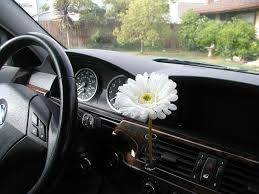 Beetle Flower Vase 21 Best Car Stuff Images On Pinterest Cars Car And Pink Car