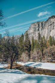 snow day at yosemite national park keer stee big question mark on the science behind why some of the trees were smokin and others were not maybe something to do with the moss growth