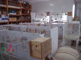 heat l for bird aviary breeding room had heat and ac plus cages were covered on backs and