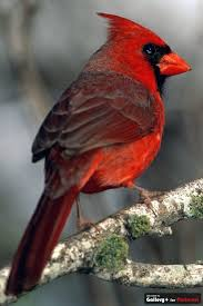 West Virginia birds images West virginia bird images reverse search jpg