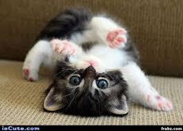 I Can Haz Meme Generator - somersault kitten meme generator captionator caption generator