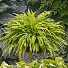 Flowering Shrubs For Partial Sun - 207 best shade gardens images on pinterest balcony cobblestone
