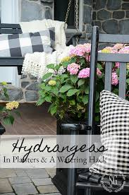 How To Make A Self Watering Planter by Hydrangeas In Planters And A Self Watering Stake Diy Stonegable