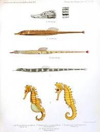animal u2013 sea shells and related vintage printable at swivelchair
