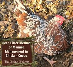 the chicken the deep litter method of waste management in