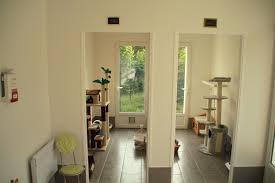 chambre pour chien chambre pour chien